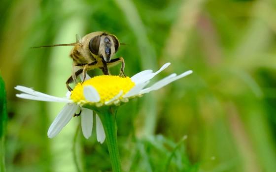 Op zoek naar kriebelbeestjes