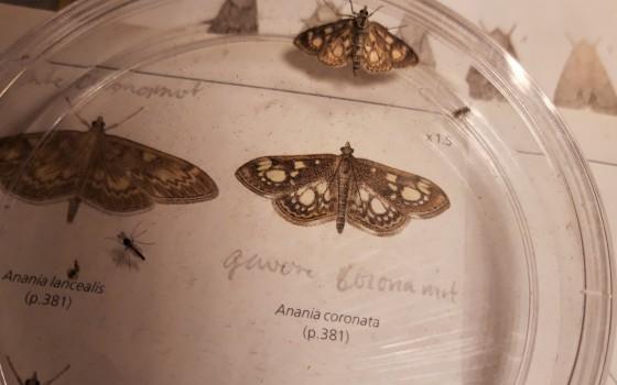 Nachtvlinderen